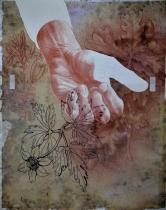 RL 12422r, studi di piante, 2014 matita sanguigna, pennarello su acetato, nastro adesivo, stampa su carta sottoposta alle intemperie per tre mesi, cm 38,5x32
